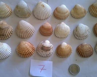 7 c) ocean shells, grass, clam shell