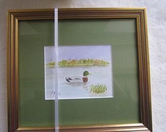 Framed watercolor mallard duck