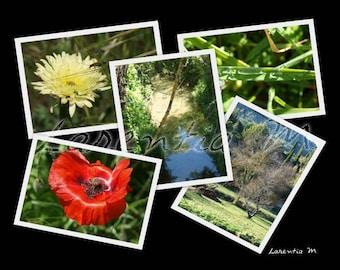 Photo 30X40cm jumble of Beausset var wild flowers