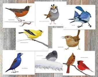 Notecards --Brad's Backyard Birds, Collection #3