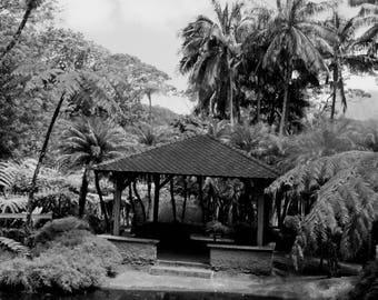 """Black and white photography """"lily pond"""" martinique, may 2015"""