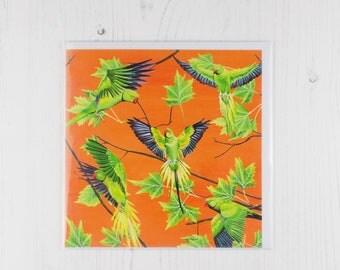 Parakeet Greetings Card
