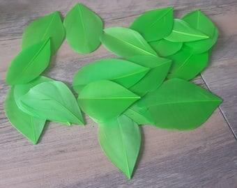 1 light green 5-6cm high