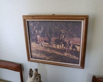 Whitetail Deer art on canvas in wood frame