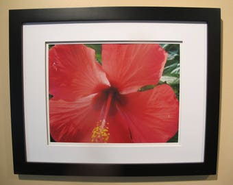 Flower Photograph with mat and black frame. 8 X 10 or 11 X 14