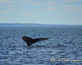 Photography: humpback 20 x 30 cm