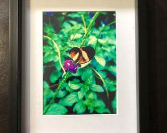 Wall Decor Landon's Butterfly: Color Photograph