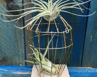 Air Plant in a wire cage