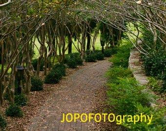 Trail, Down the Garden path - South Coast, NSW, Australia
