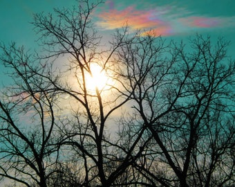 Wall Art Print Sets, Prints Set, photo gift set, SET OF THREE, Sunshine Through Tree with Rainbow Cloud, Digital Download Photo, home decor