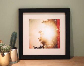 Treelight - Lomography Photo Art Print Poster