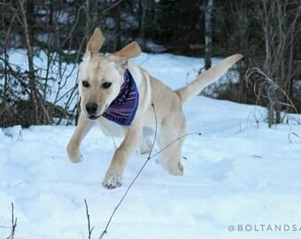 Carmen. Boho Dog Bandana | Boho Dog Scarf | Dog Bandana | Fall Dog Bandana |