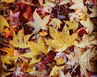 Photo Print Canvas Fall Leaves