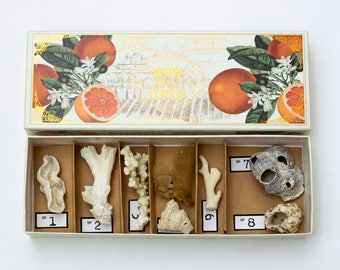 Coral, Sponge, Barnacles Collection in a Soap Box