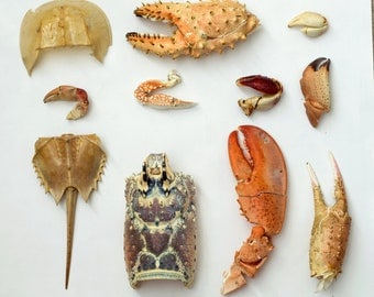 Crab Claws Collection