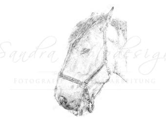Digital download for your own prints-motif horse in sketch style