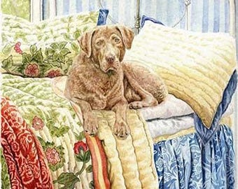Chesapeake on the Bed A Limited Edition Chesapeake Bay Retriever Print