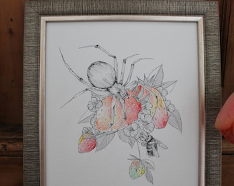 Spider watercolour, framed