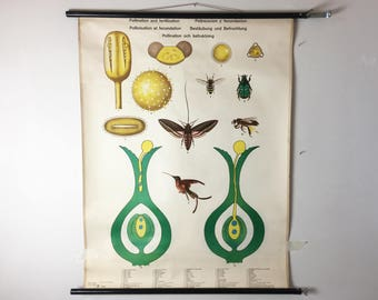 Vintage botanical educational classroom poster
