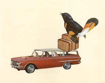 Rambling redstarts with a tail wind.  Original collage by Vivienne Strauss.