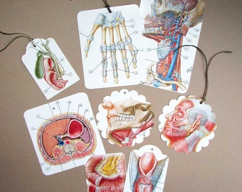 Set of 8 Medical, Anatomy Flash Cards Image Paper Tags,  Scrapbook Tags, Gift Tags, Hang Tags, Body Parts Cards, Bones, Muscles, Organs