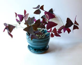 Turquoise Stoneware  Planter for Succulents, herb or small houseplant Built in drainage Handthrown