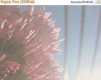CIJ SALE Pink Floral Photograph, Reaching for the Sun, Pink Pentas, Spring Floral, Garden Rose, Romantic Garden, Gift for Her, Cottage Wall