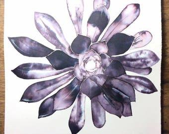 Succulent (original)