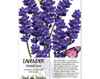 Hidcote Lavender Seeds (Lavandula angustifolia) Non-GMO Seeds by Seed Needs