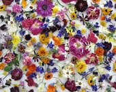 Bulk Dried Flowers, Wedding Confetti, Table Decorations, Flower Girl, Aisle Decorations, Biodegradable, Guest Book Table, 12 Cups Confetti