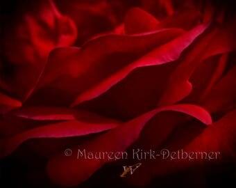 Romantic art , red rose, roses, photo, botanical art, bedroom art, home decor, wall art, art prints, bedroom decor, modern art, photograph