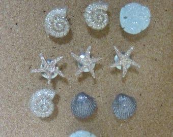 Seashell Push Pins