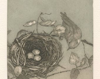 Nest of Orange-Crowned Warbler, Fine Art Intaglio Etching