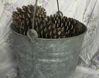 A Galvanized Bucket of Pine Cones