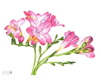 Freesias print of watercolour painting, F22917, A3 size, Freesias watercolour painting print, Freesia watercolor painting print, Flowers