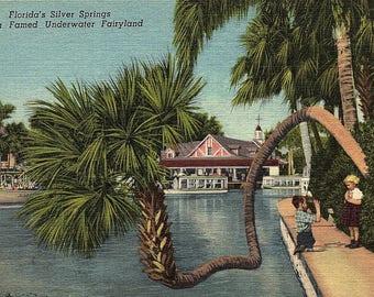 Silver Springs, Florida, Underwater Fairyland - Vintage Postcard - Postcard - Unused (ZZ)