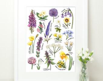 British Wildflowers Botanical Study Illustrated Print. 12x16. Welsh Flowers. Purple and yellow. Wild Flowers. Foxglove. Daffodil. Bluebell