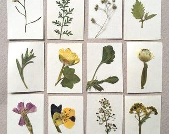 Dollhouse miniature herbarium, real pressed plant album. Set #8 of 12 plants.