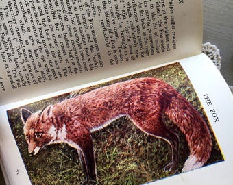 The Observer's Book of British Wild Animals Vintage Illustrated Pocket Field Guide Wildlife Nature Natural History Book 1940's
