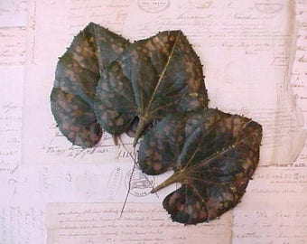 3 Large and Beautiful Vintage Millinery Leaves