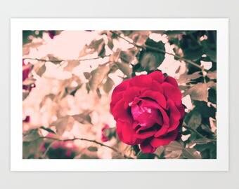 Paris photography, Paris roses, french wall decor, Paris decor, Paris photo, Paris wall art, Paris art, Paris wall decor, canvas art
