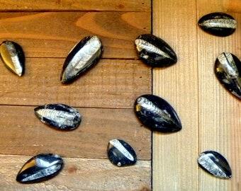 Orthoceras fossils polished pendant necklace gemstones rocks minerals vintage ocean life jewelry