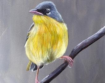 SALE Bird Art Painting Grey Crowned Yellowthroat SFA Wildlife Original hand painted bird acrylic painting by Australian Artist Janet M Graha