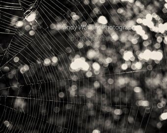 Spider web photography, web photography print, abstract photograph, abstract decor, black and white wall decor, abstract wall decor, web