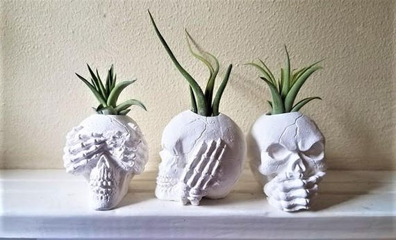 See no evil, Hear no evil, speak no evil skulls, skull planters, set of air plant holders
