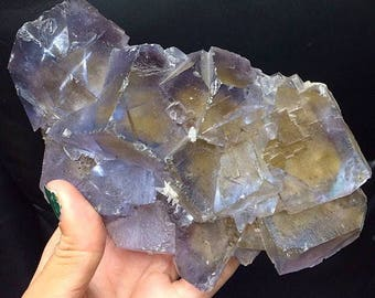 Yellow Fluorite XL Blue Phantoms Pyrite Inclusions Cubic Crystals Rocks and Minerals Healing Crystals Mineral Specimen Cave-in-Rock IL USA