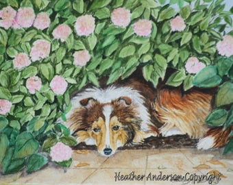 "8x10 Giclee Print, sable Sheltie, ""Sheltie in the Shade"", Hand Drawn Art, sable Shetland Sheepdog among pink flowers"