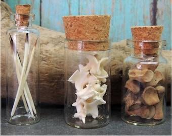 Specimen Collection Wild Hog Toe bones, Porcupine Quills, American Eel vertebrae in Glass Vials,, Natural History, Oddity, Wierd stuff