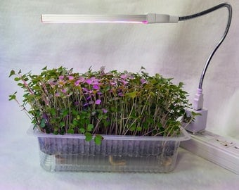 Auto Watering Grow to Eat w LED Grow Light Microgreen Kit, You Cannot Get Better Nutrition, Fresher