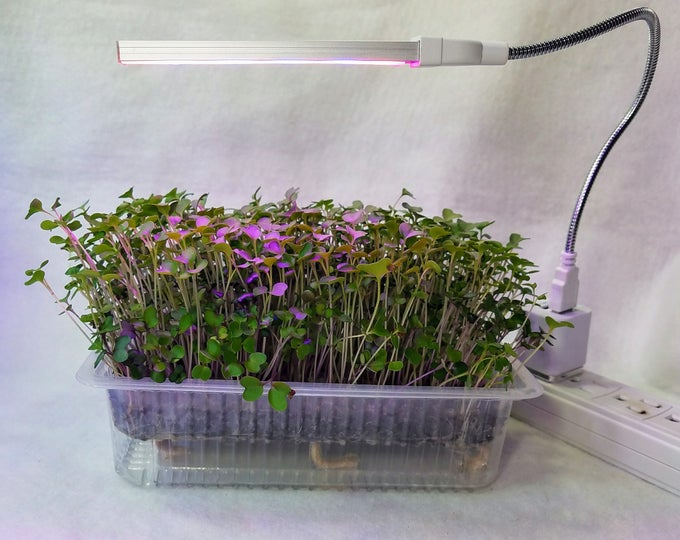 Featured listing image: Auto Watering Grow to Eat w LED Grow Light Microgreen Kit, You Cannot Get Better Nutrition, Fresher